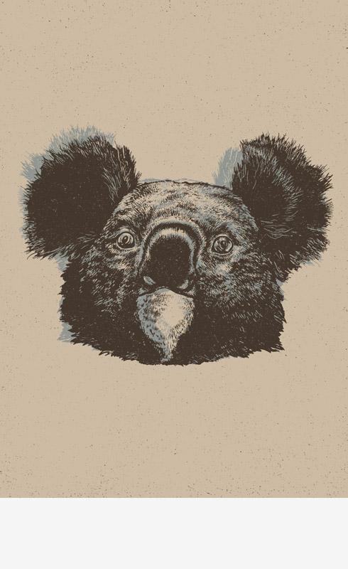http://okumile.pl/files/gimgs/50_koala.jpg